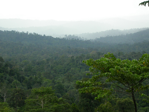 A vanishing forest in Borneo.